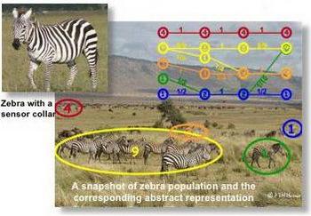 Зебры ходят с GPS